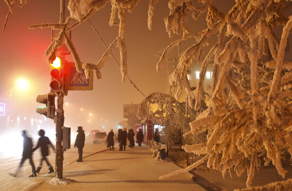 Trees are covered with hoarfrost in Yakutsk